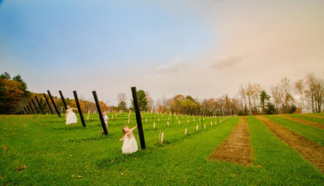 In the Vines - WillowsAwake Winery