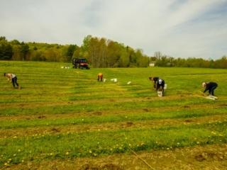Planting crew in full swing