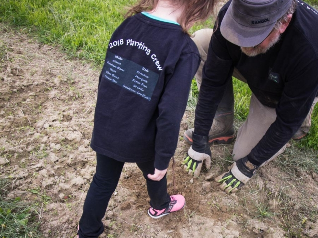 Stomping the soil down